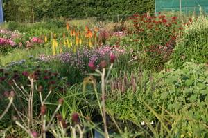 Vaste Planten Tuin : Spectaculaire vaste planten in het zonnetje mijntuin